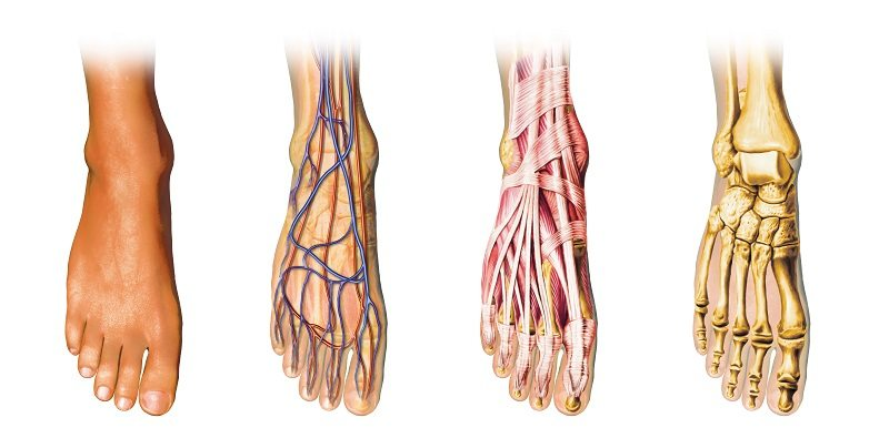 Podiatry and Your Veins