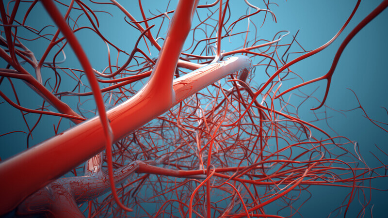 Guide to Vein Conditions and Vein Health