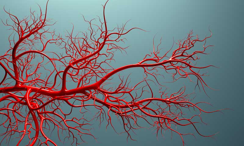 what do veins do, vascular system with veins full of blood